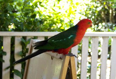 king_parrot.jpg